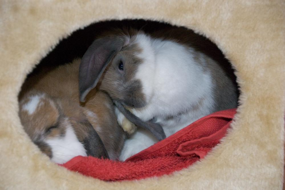 Zwergwidder kaninchen nhd beschäftignung für tier